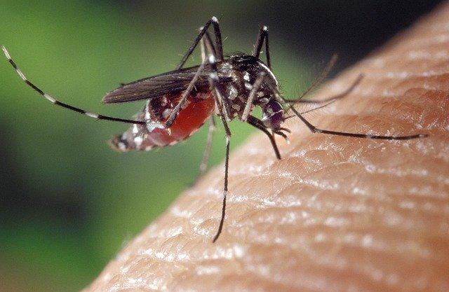 Les remèdes naturels anti-moustiques